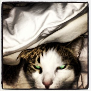 Demon Kitty's Cold!